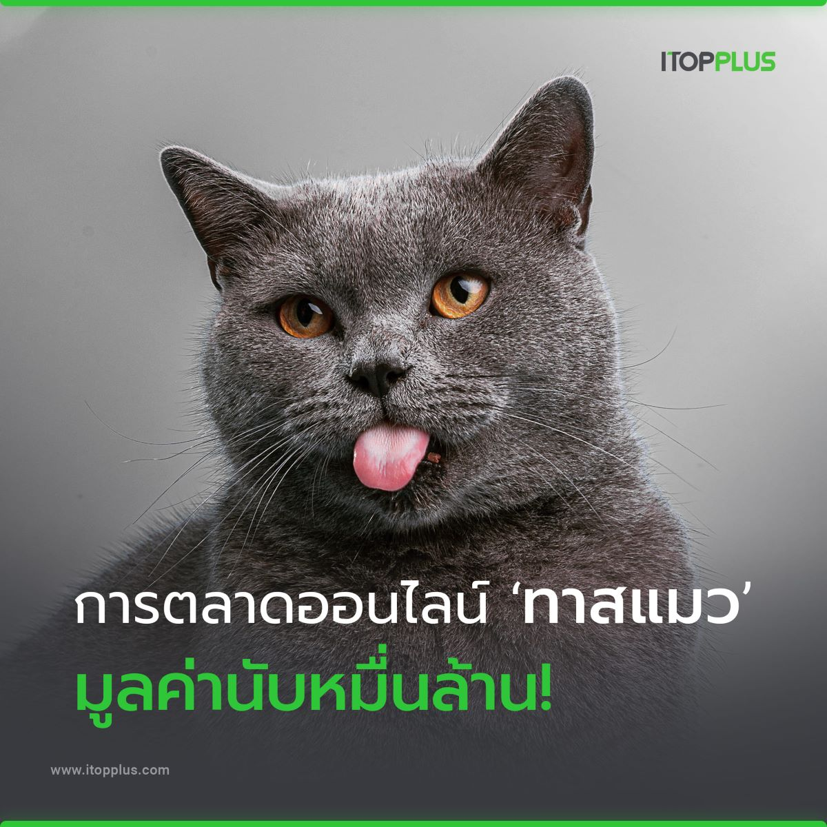 เปิดการตลาดออนไลน์ทาสแมว มูลค่านับหมื่นล้าน